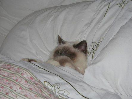 史上最全的猫咪睡觉图