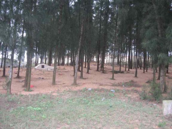 周易祖坟上长杂树